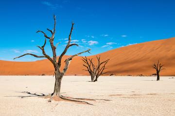 Stunning Deadvlei near Sossusvlei, Namibia