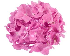 Fond de hotte en verre imprimé Hortensia Pink hydrangea flower