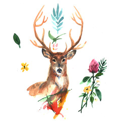 watercolor illustration deer