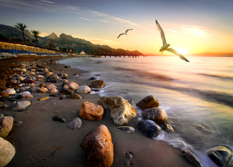 Fototapete - Seagulls over beach