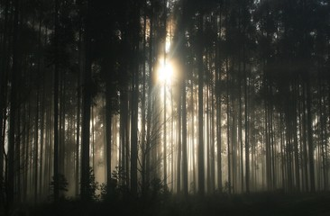 Sunlight shining through a forest.
