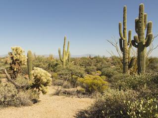 A desert landscape in Arizona, USA.