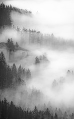 A foggy forest in Austria.