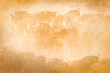 A herd of wildebeest migrating, Masai Mara, Africa.
