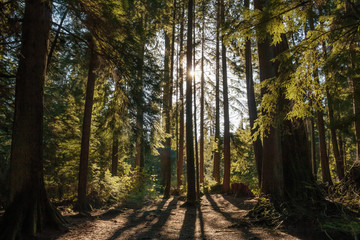 Photo of sun behind tree trunks on forest Fototapete