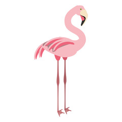 isolated cute flamingo icon vector illustration graphic design