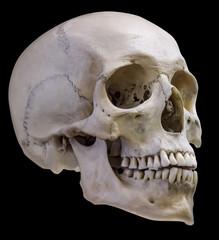 isolated on black single human skull