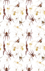 brown and green spiders seamless background