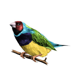 bird of finches sitting on a branch of a tree sketch vector graphics color figure colorful feathers of red, blue, purple, yellow, green colors