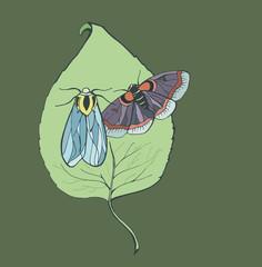 Night butterflies on foliage
