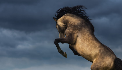 Wall Mural - Andalusian horse rear with dramatic overcast skies. Photo with place for text.