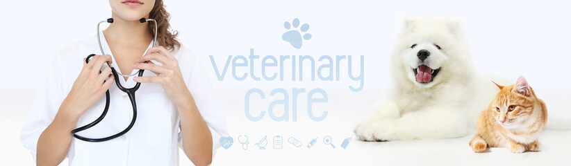veterinary care concept. hands with stethoscope, dog and cat with graphic symbols isolated on white background