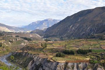 Terrasses du canyon de Colca au Pérou