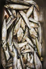 Close up of fresh sardines fish.