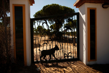 The silhouette in the shape of an Iberian lynx is seen on a fence at the entrance of the Acebuche visitor centre during a forest fire near Donana National Park, in Almonte