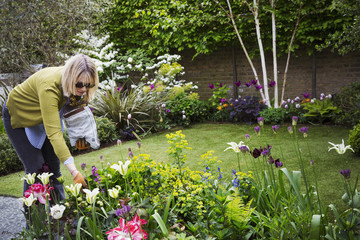 Woman standing in a garden, looking at flowers in a flowerbed.
