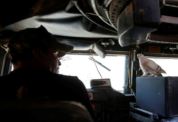 An Iraqi soldier looks at his pet dove as he drives an armoured fighting vehicle on the frontline in the Old City of West Mosul