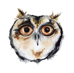 Watercolor owl bird