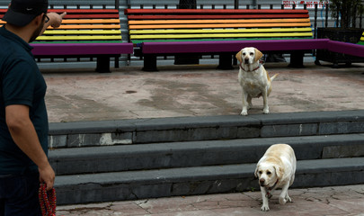 A man gives orders to his dogs to take a photo in front benches painted with the colours of the rainbow in Oviedo