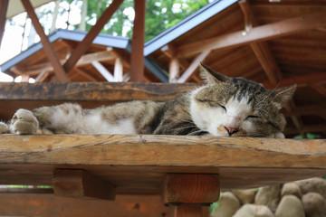 休憩所で寝る猫