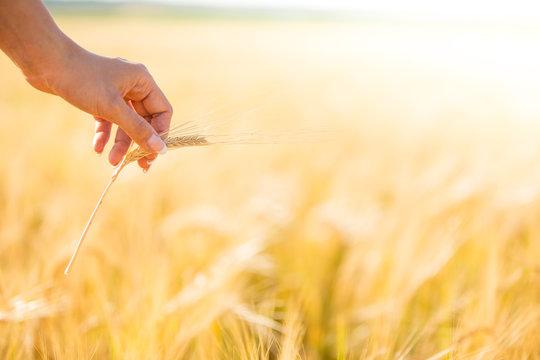 Girl in red dress walking on wheat field