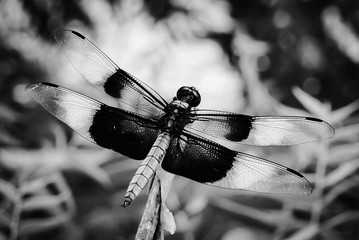 An up close view of a Dragonfly