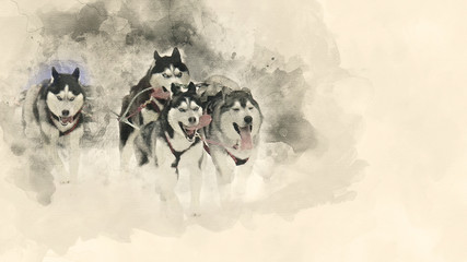 Sled Dog Race. Home pet. Watercolor background