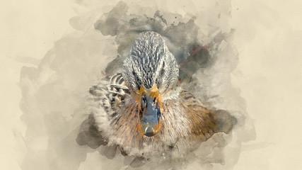 Bird ducks. Watercolor background