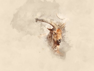 Mountain goat. Watercolor background
