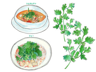 パクチー料理 フォーとトムヤムクン