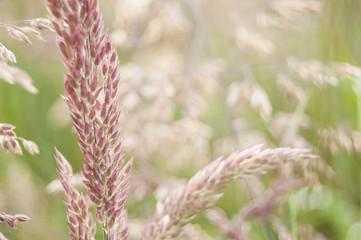 Macro of a straw in a Field of flowers.