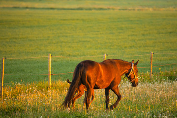 Horse and her foal, Finland