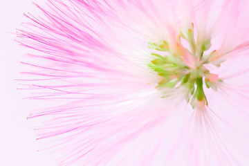 Defocused blurred pink flower natural background