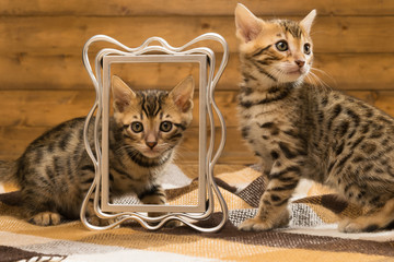 Two kittens playing with photo frame on the background of a wooden wall