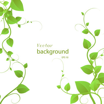 foliage on a white background, climbing plants, vector illustration