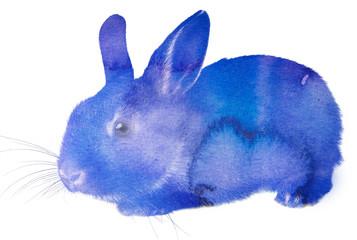 little rabbit - aquarelle picture (watercolors)