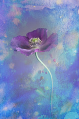 poppy flower in a vase - watercolors picture