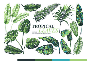 Tropical palm leaves and jungle leaves.