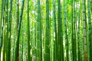 Photo sur Plexiglas Bamboo Bamboo forest of Arashiyama near Kyoto, Japan