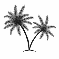 Tropical palm trees with leaves. Black silhouettes isolated palm trees on white background
