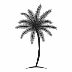 Tropical palm tree with leaves. Black silhouette isolated palm tree on white background