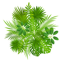Tropical leaves isolated on white