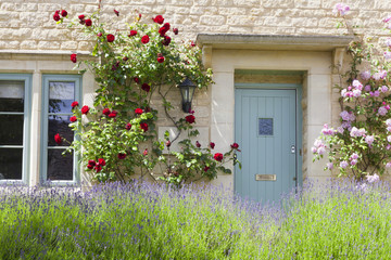 Light blue wooden doors in an old traditional English stone cottage surrounded by climbing red and pink roses , with flowering lavender in front.