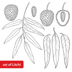 Vector set with outline Chinese Lychee or Litchi fruit and leaf in black isolated on white background. Perennial subtropical tree in contour style for summer design, juicy menu and coloring book.