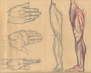 leg and palm sketches