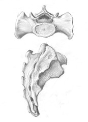 two views of sacrum
