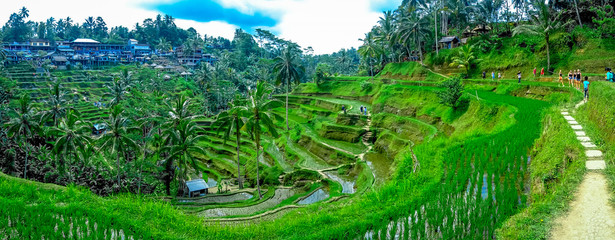 Foto auf Leinwand Bali Beautiful landscape with green rice terraces near Tegallalang village, Ubud, Bali, Indonesia
