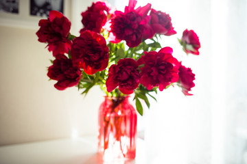 red peonies in a vase backlight