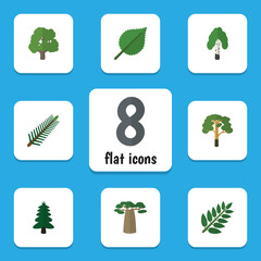 Flat Icon Nature Set Of Wood, Timber, Acacia Leaf And Other Vector Objects. Also Includes Tree, Baobab, Spruce Elements.