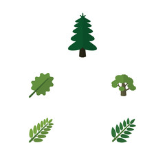 Flat Icon Natural Set Of Alder, Leaves, Tree And Other Vector Objects. Also Includes Leaves, Tree, Forest Elements.